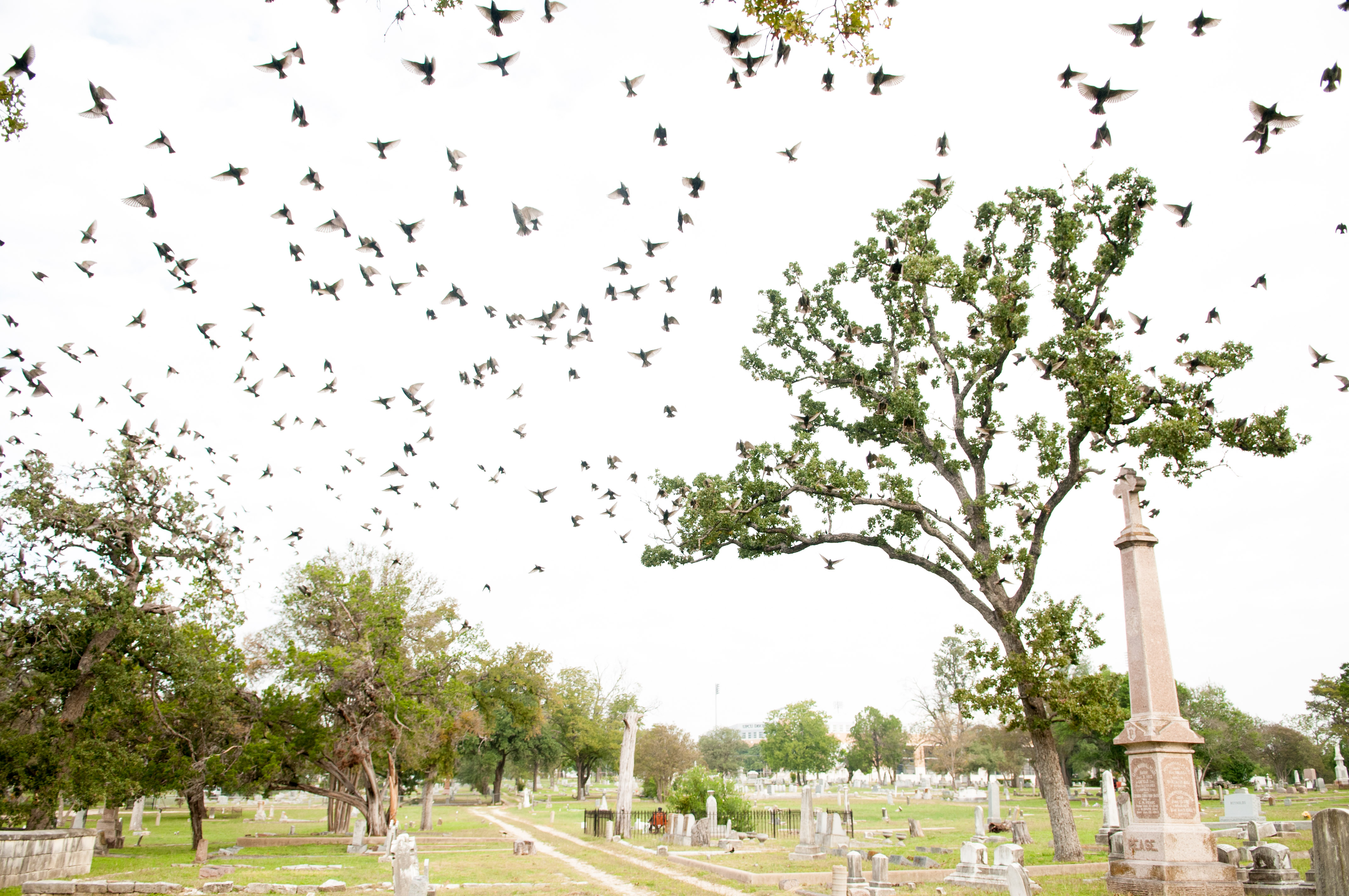 Birds fly away from the grave site to kick off an eerie morning. Photo by Skylar Isdale
