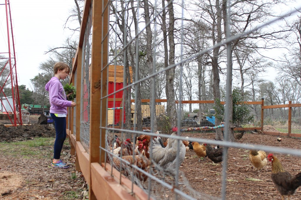 Standing next to a chicken coop, a young volunteer prepares to feed the chickens with food she picked from Genesis Gardens.