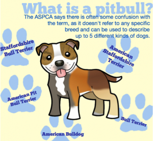 Pit Bull Infographic