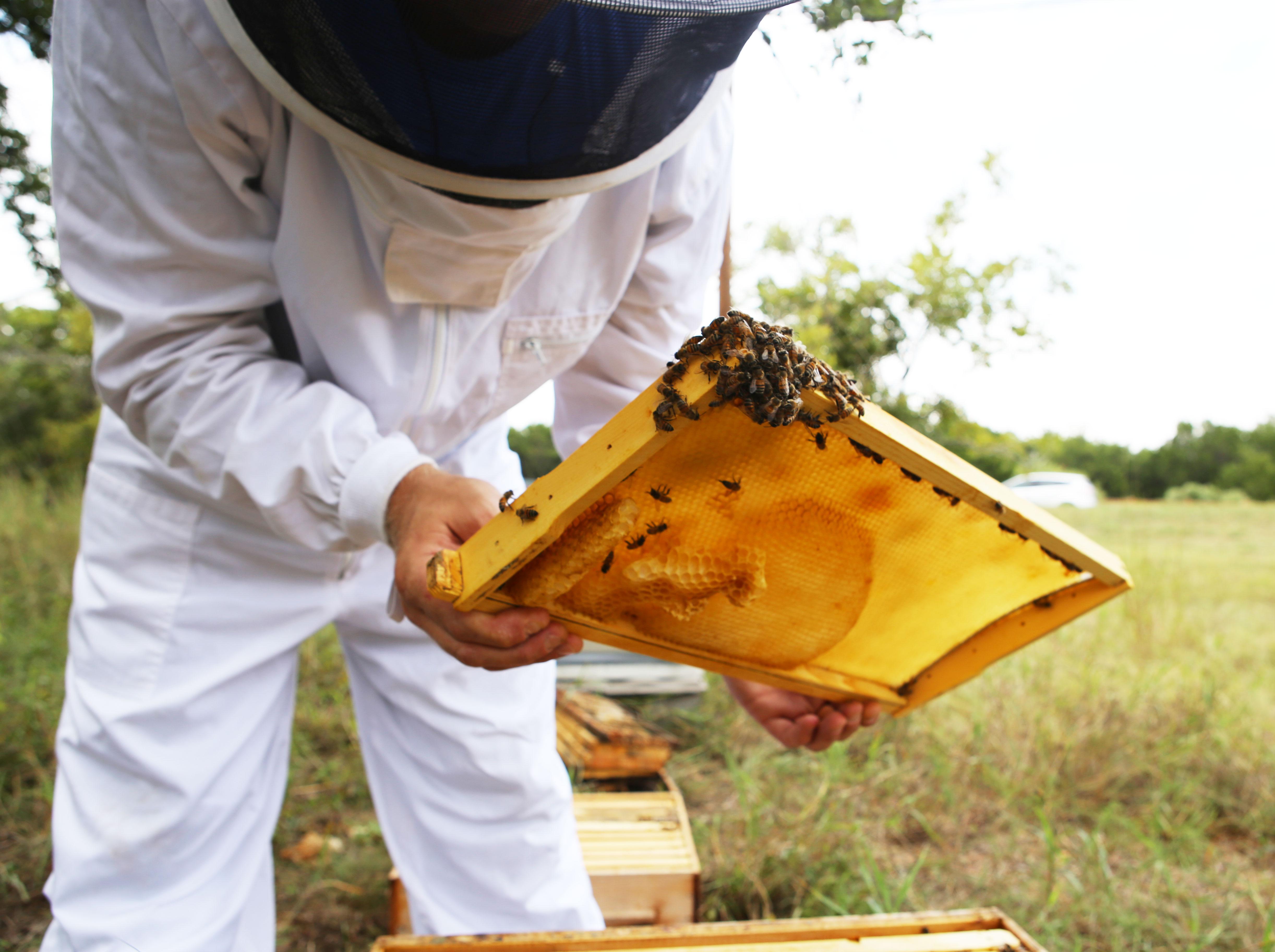 Beesuit