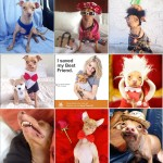 In 2012, Tuna's Instagram went viral, increasing from 8,500 followers to over 32,000 in less than 24 hours. Tuna now has over 1.2 million Instagram followers.