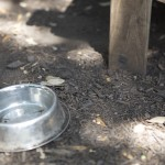 Dog water bowls are scattered all throughout the Moontower Saloon outdoor venue to cool down its furry friends that accompany its customers. They are located at 10212 Manchaca Road and is open 11:00 a.m. to 2:00  a.m. everyday and noon to 2:00 a.m. on Sundays.