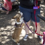 One four-legged attendee anticipates a purchased frozen treat from its owner. Shaggy Waggin Treats finds local dog events online to attend and sell its ice cream.