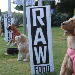 """Display dogs rest outside of the Great OutDogs store. The stuffed animals were originally purchased to display pet merchandise but owner Matt Edwards said """"they were such a big hit that [he] put them on the roof and all over the place cause they're so lifelike""""."""