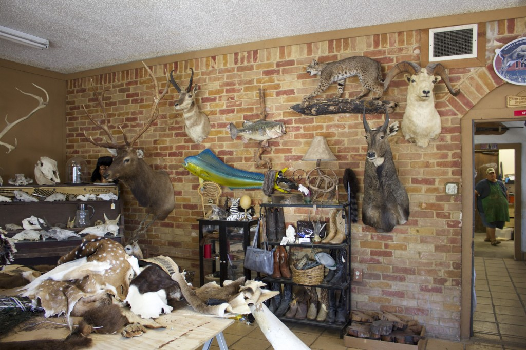Upon scanning the front room of Martinez Brothers Taxidermy, one may feel drawn to play I Spy. The impressive array lends to the unique eclectic vibe of the shop.