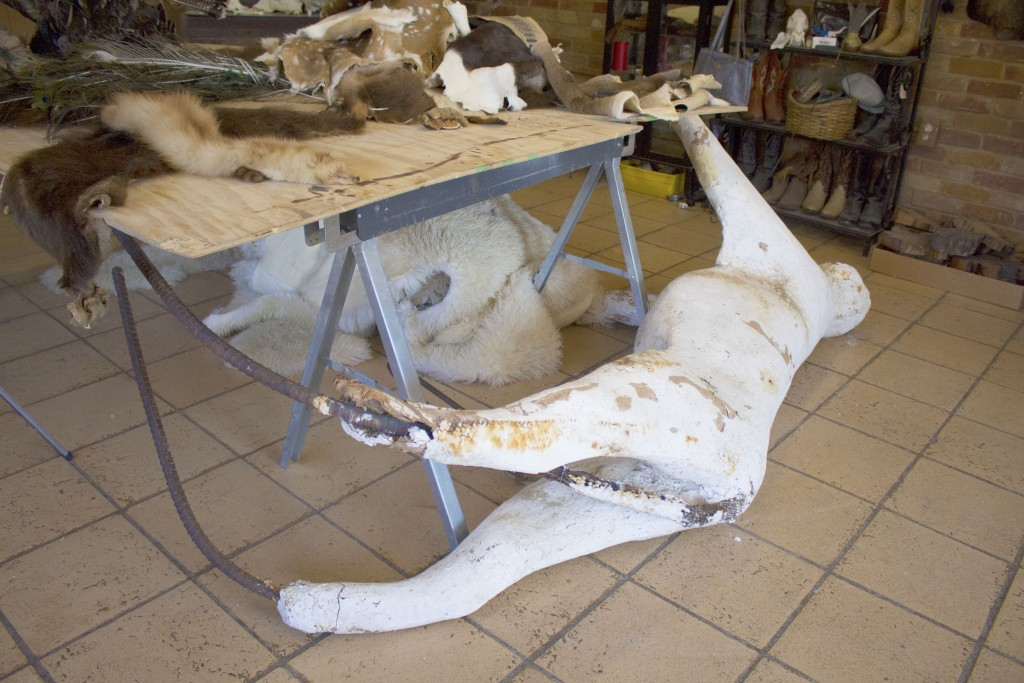 Soon to be the mold inside an African lion mount, this mannequin in progress is too large to be kept inside the work room. No animal is too big or small to preserve for the Martinez family.