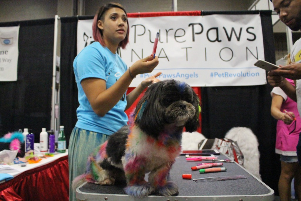 """Creative Grooming"" is not only entertaining, but it serves a higher purpose. Pure Paws paints their pups like this to garner attention and raise awareness about the unregulated pet grooming and products industry."