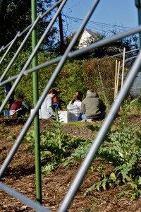 Every Sunday morning, volunteers meet at the Microfarm to tend to their crops.
